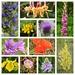 Norfolk Wild Flowers 1