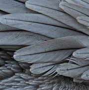 21st Jul 2019 - 21-07 feather