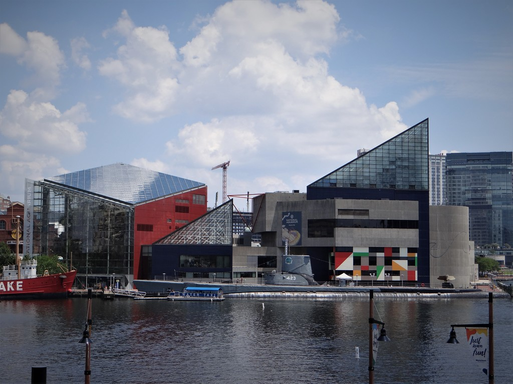 Todays Destination- National Aquarium by brillomick