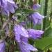 Raindrops on flowers....
