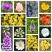 Norfolk Wild Flowers 2