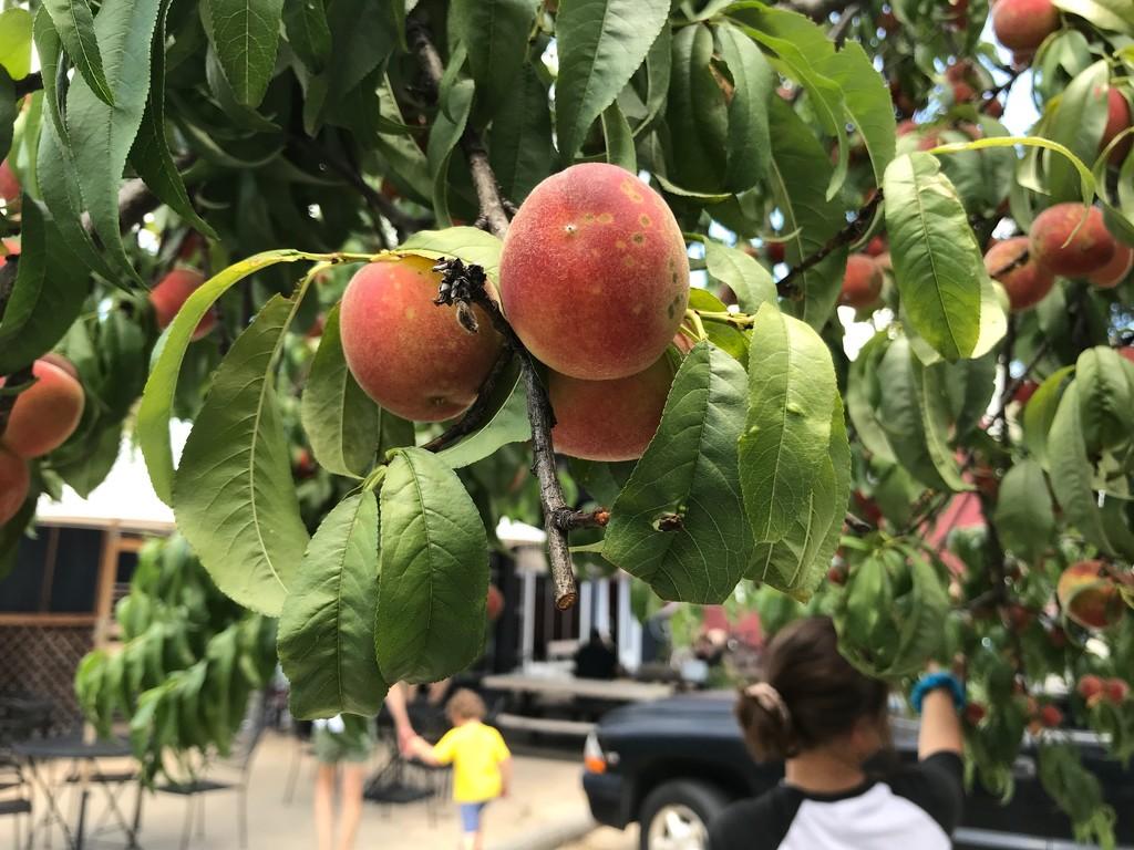A Peachy Break by allie912