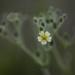 Yellow wild flower! by fayefaye