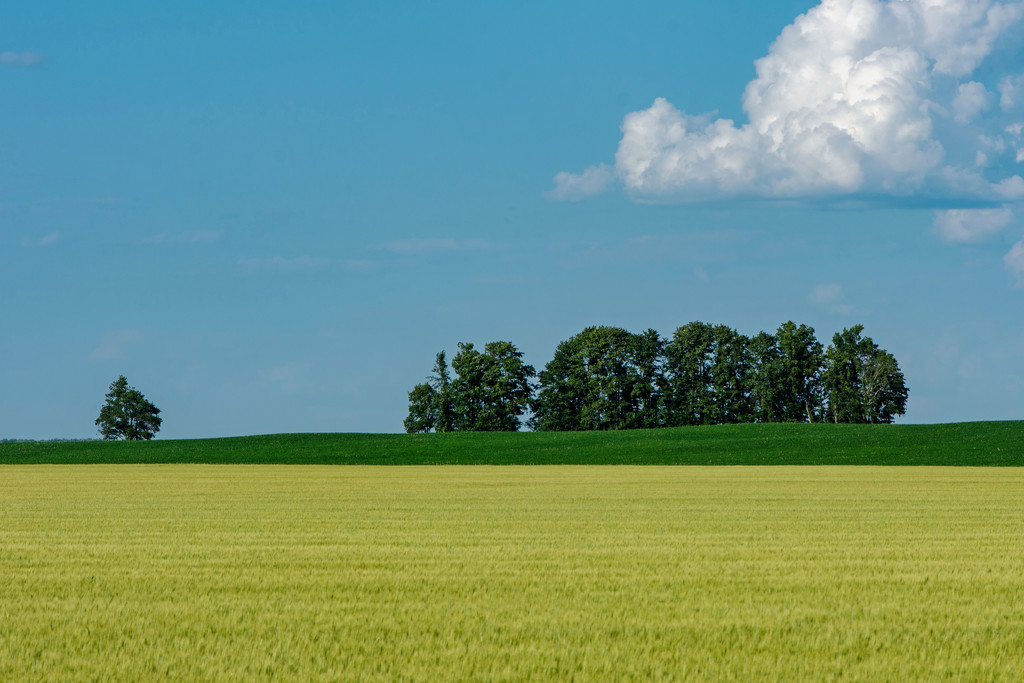 52 Week Challenge - Composition: Negative Space by farmreporter