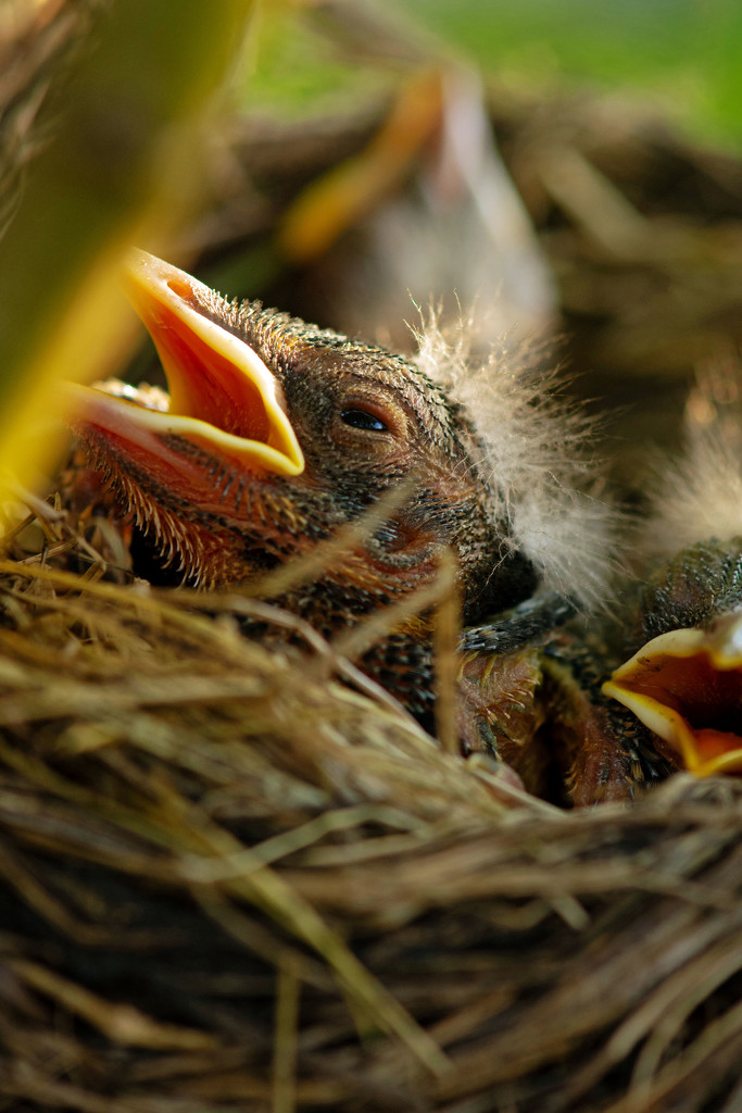 Are You My Mommy? by farmreporter