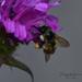 ~Buzy Bee~