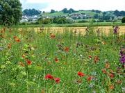 23rd Jul 2019 - Little villages and fields