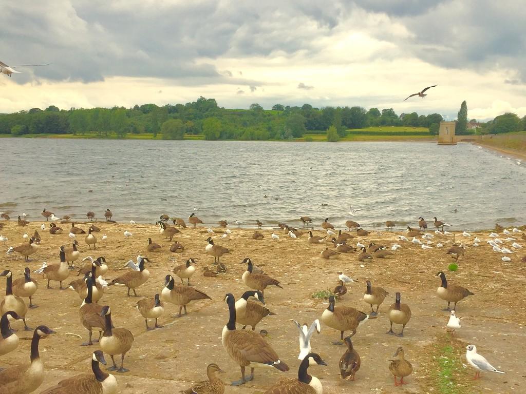 Birds! by lilaclisa