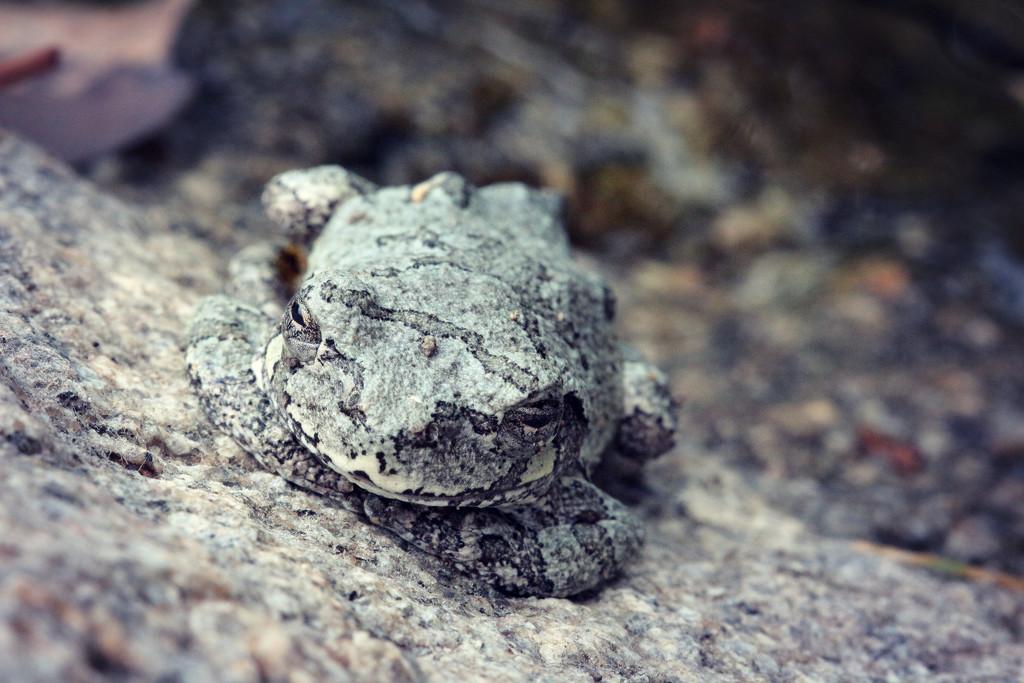 Like a Rock by juliedduncan