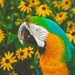 Parrot and Petals by lyndemc