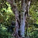 Tree Trunks ~