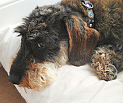 23rd Jul 2019 - Fresh From The Beauty Parlour