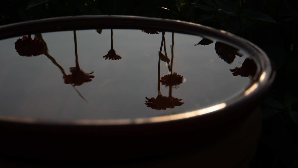 Reflections in a bird bath by randystreat