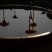Reflections in a bird bath