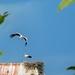 Burgau storks  by ludwigsdiana
