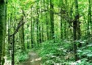 24th Jul 2019 - A stroll through the forest