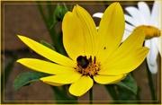 24th Jul 2019 - Busy little bee