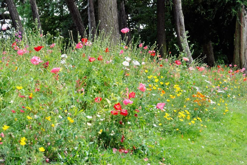 Urban wild flowers by rosie00