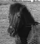 24th Jul 2019 - Horse behind the fence
