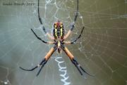 25th Jul 2019 - Arachnophobia