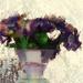 window flowers by kali66