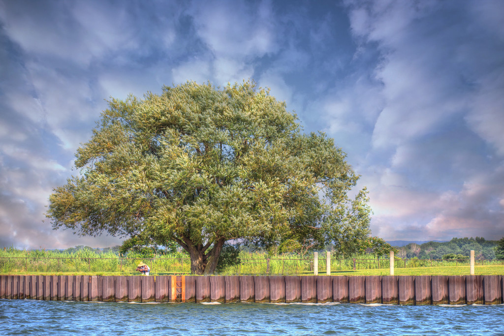 Tree by the Lake by not_left_handed