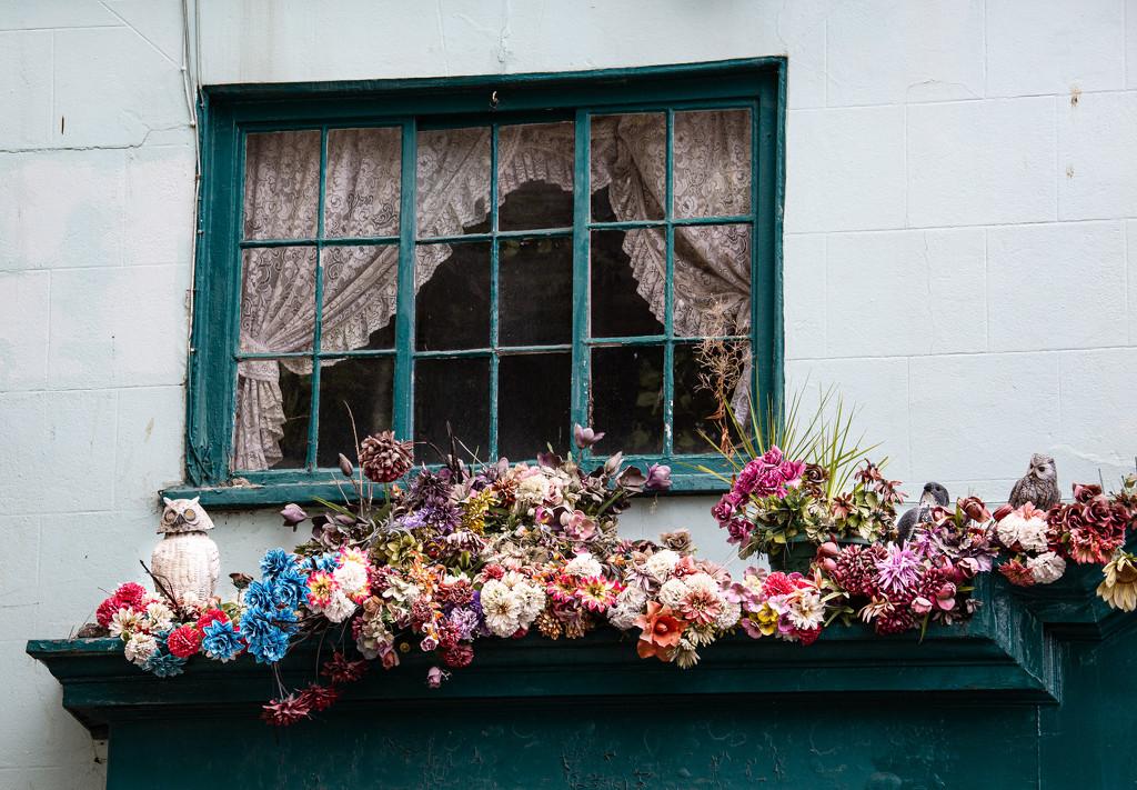Window Boxes, Bridport by dorsethelen