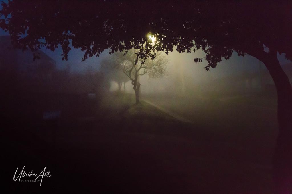 early morning fog by ulla