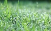 27th Jul 2019 - Cool Wet Grass