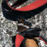 9th Jul 2019 - Butterfly