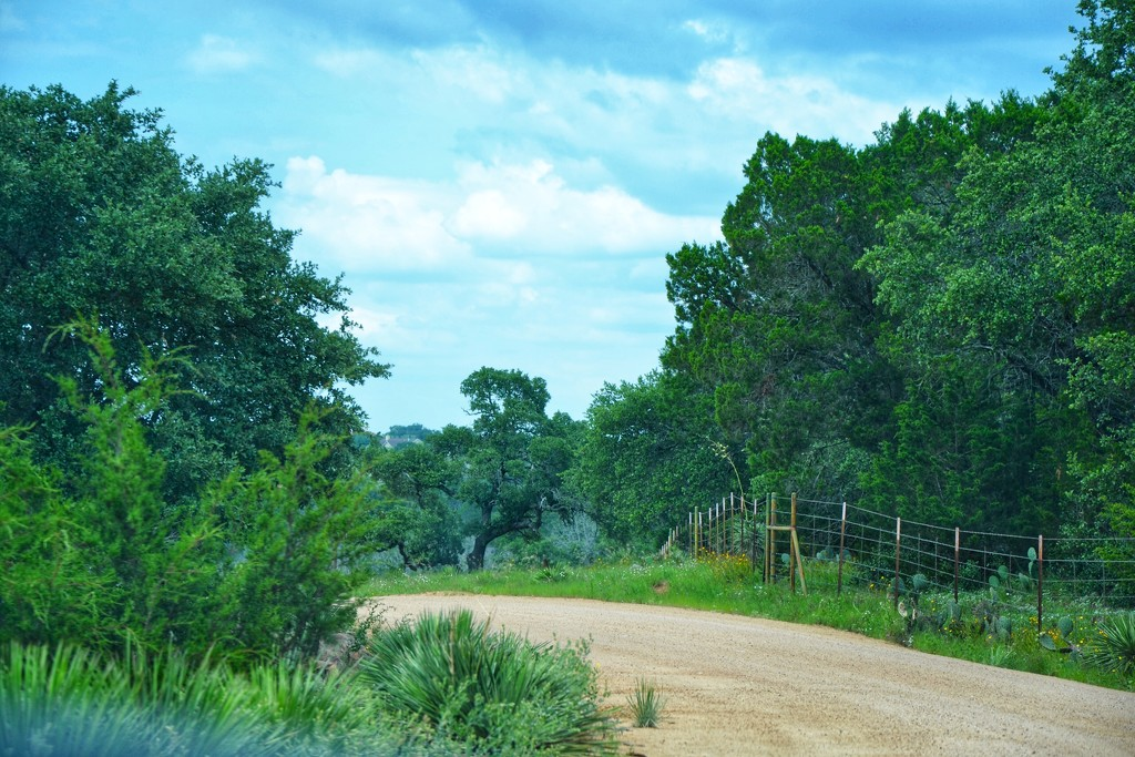 A Hill Country Road by louannwarren