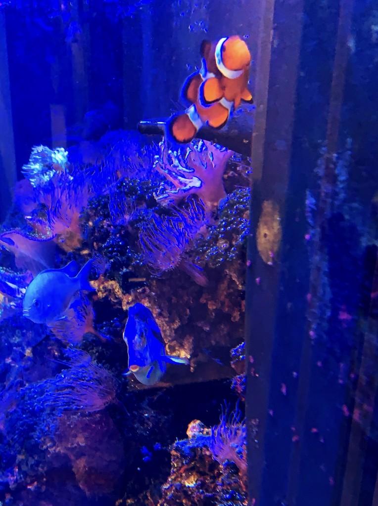 I found Nemo  by louannwarren