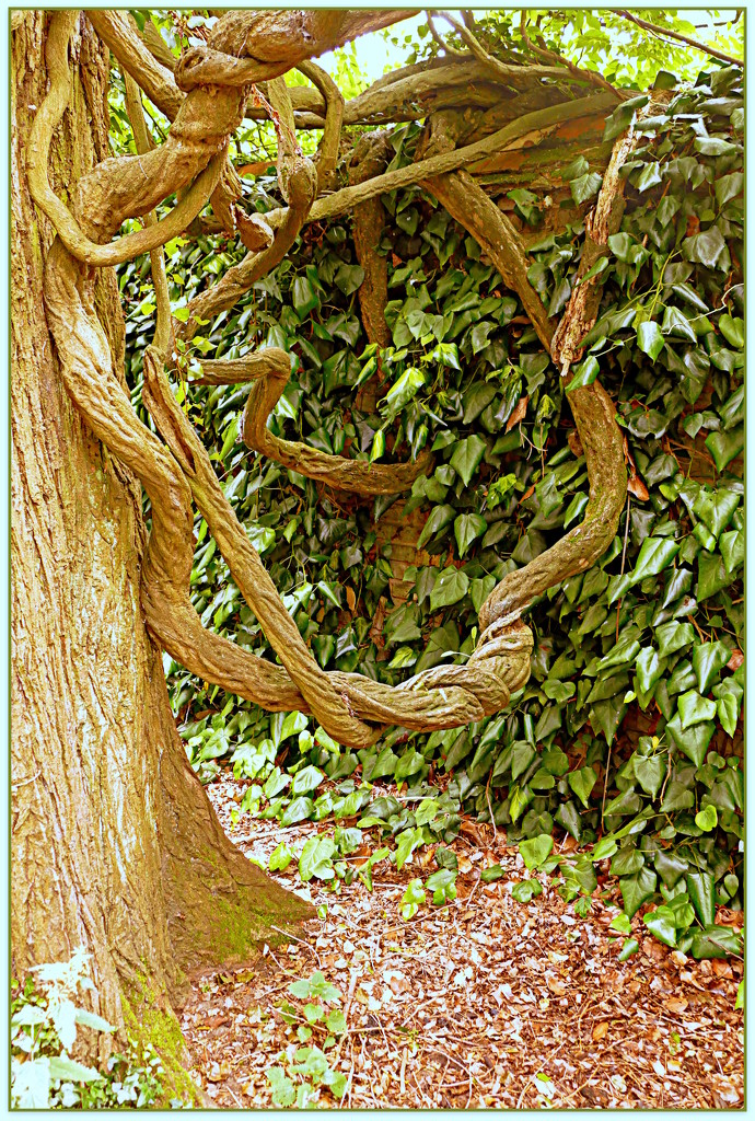 Gnarly old root. by judithdeacon