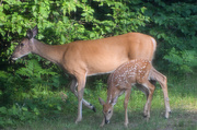 22nd Jul 2019 - Mama and Baby in My Backyard