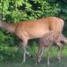 Mama and Baby in My Backyard by kareenking
