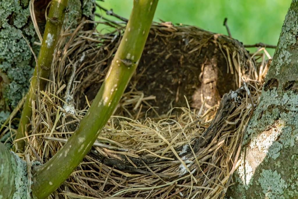The Empty Nest by farmreporter