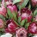 Protea Bouquet by ninaganci