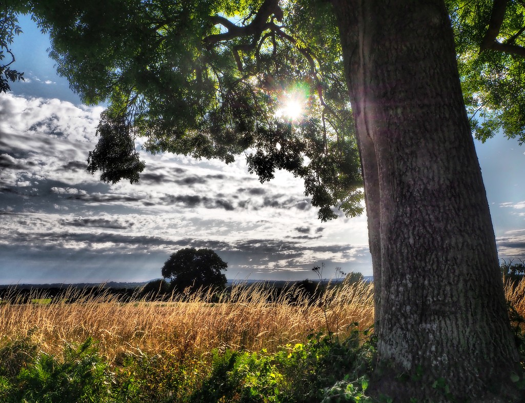 Pastures new by suesmith