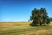 "30th Jul 2019 - The ""seasons"" tree"