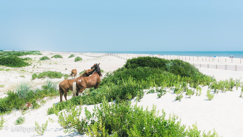 Horseplay In The Dunes by lesip