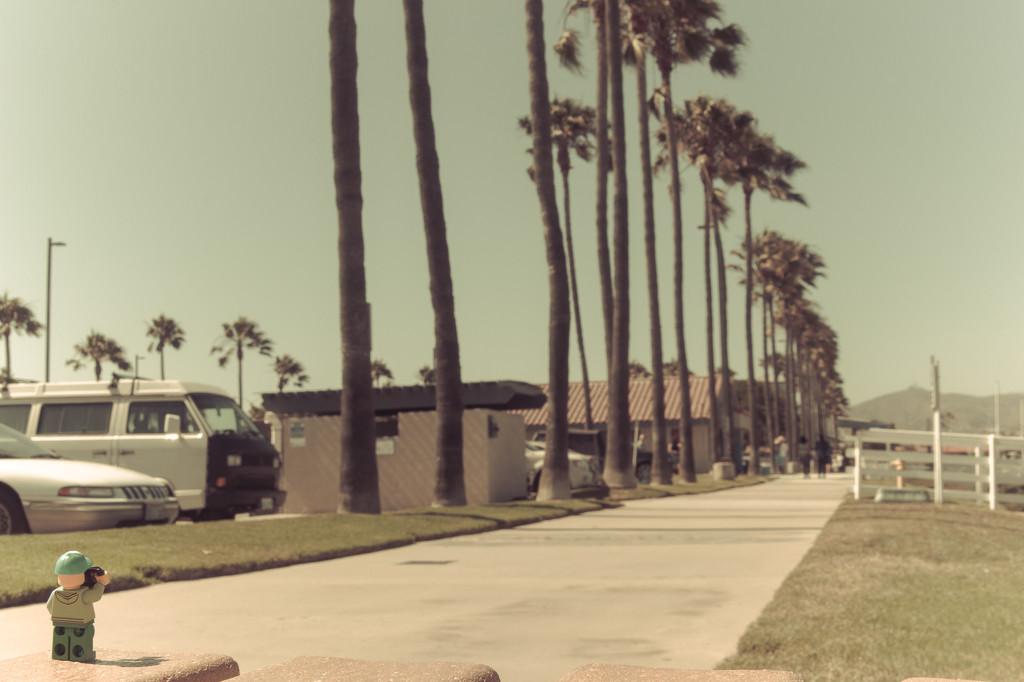 (Day 166) - Palm Tree Lane by cjphoto