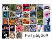 31st Jul 2019 - Framing July