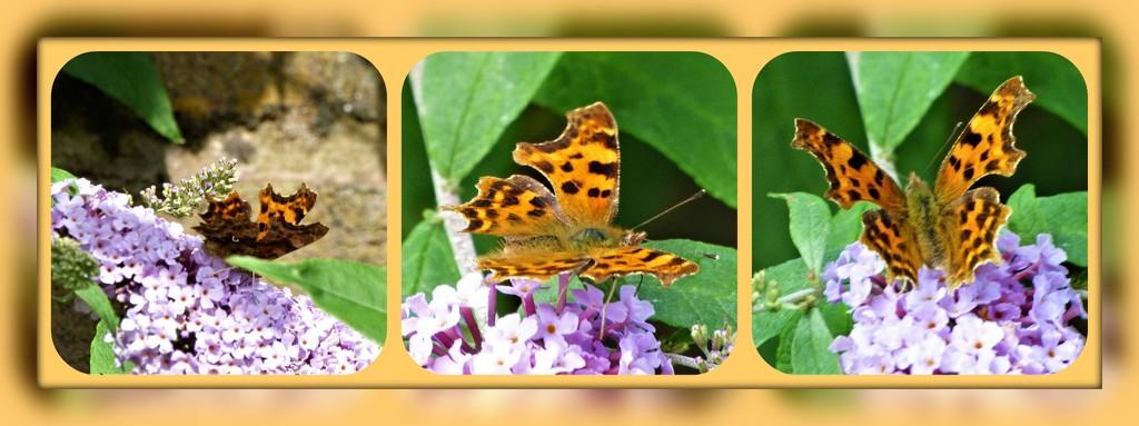 Butterflies  by beryl