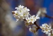 31st Jul 2019 - A Touch Of Spring In WinterDSC_4735