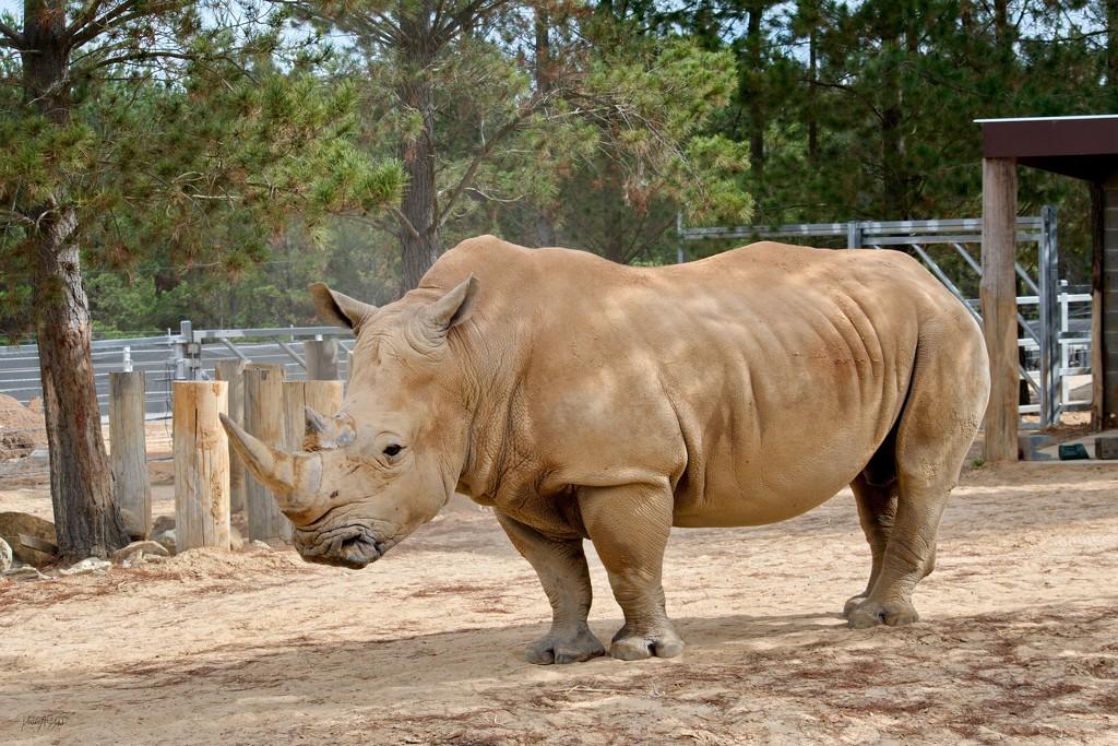 Rhinoceros by kgolab