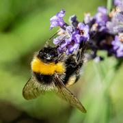 31st Jul 2019 - Bee...