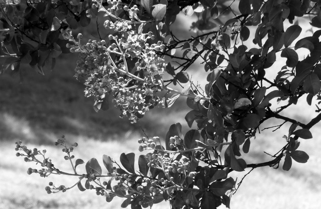 Garden Tree by linnypinny
