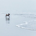 Morning fog at the beach by novab