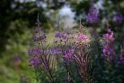 1st Aug 2019 - Early Morning Garden