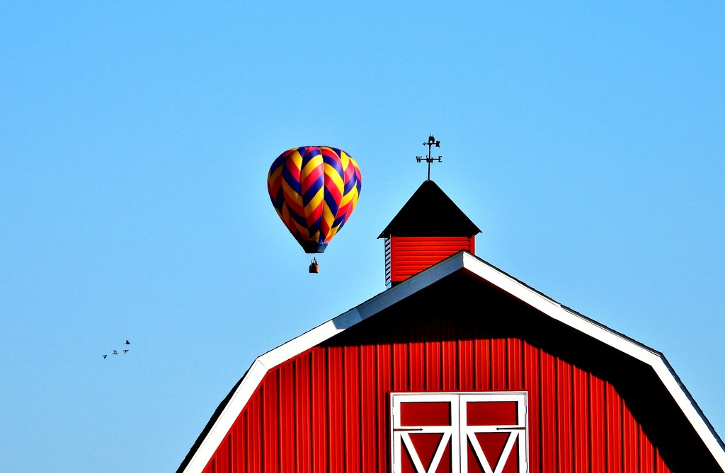 Birds, Balloon, Barn by lynnz
